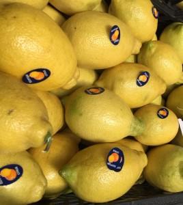 Adalia Lemon 3